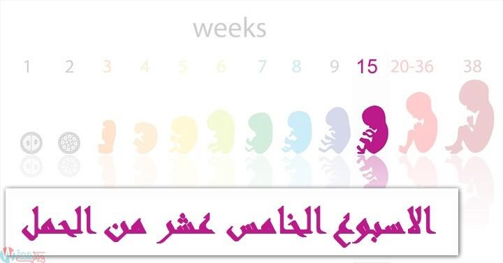 اعراض الحمل في الاسبوع الخامس عشر : كل ما تحتاجي معرفته! 1